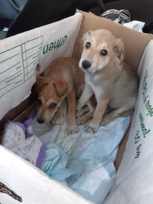 two small puppies brought by Romanians