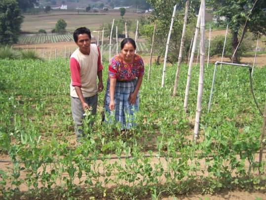 Marta and her husband with their green bean plants