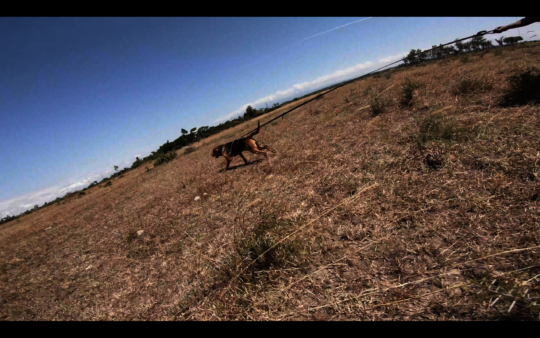 One of our tracking dog is being deployed.