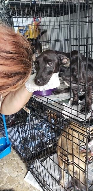 Rescue/Vet/Transport/Adopt 200 Street Dogs from PR
