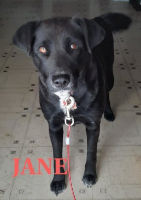 Jane's owner said she would be outside in the cold