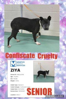 Ziya's yard mate froze to death.
