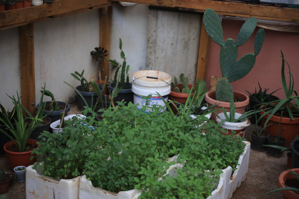 Organic rooftops farm in Palestinian Refugee Camps