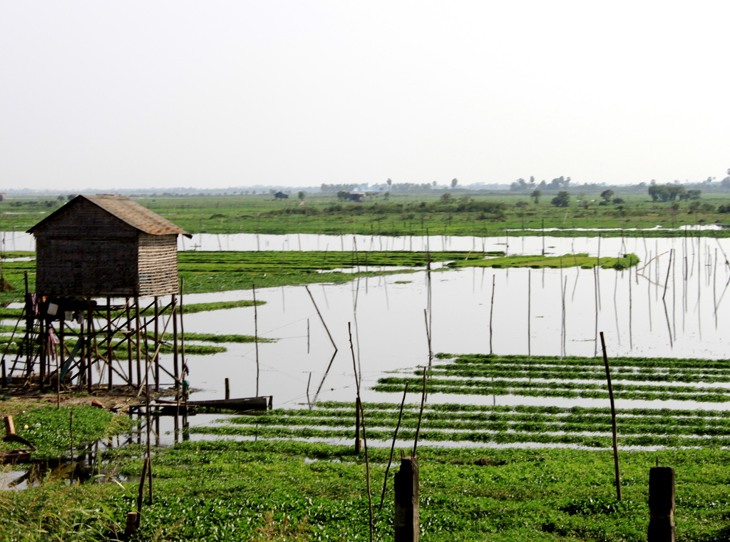 Countryside in Cambodia