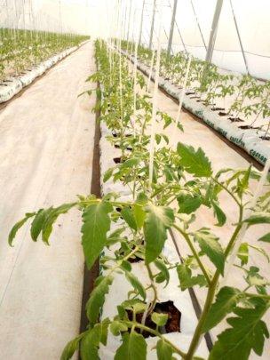 Richmond's greenhouse project.