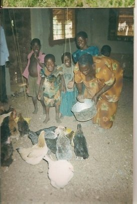 Provide goats and hens to 100 widows and orphans
