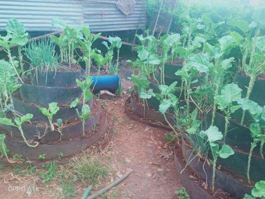 Our Endeavor to sustainability of Feeding Program