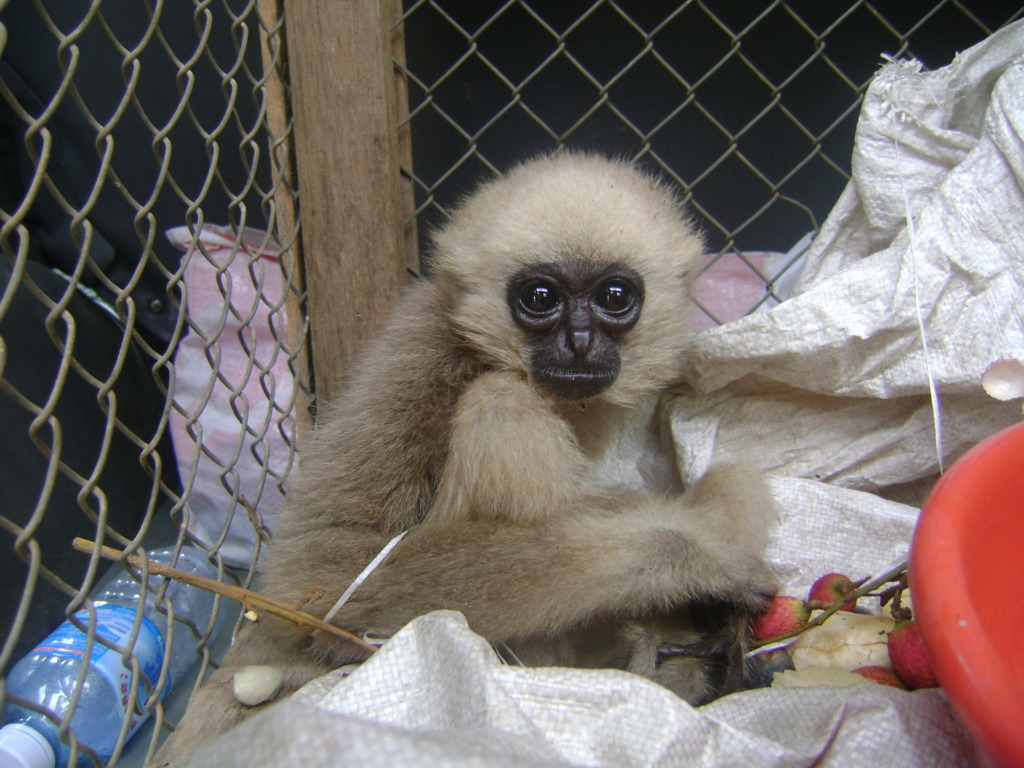 Illegal wildlife trade orphans hundred of babies