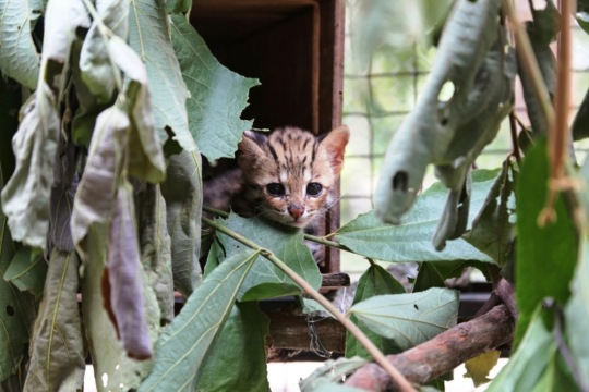 Kitten at Phnom Tamao Wildlife Rescue Center