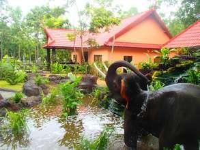 Elephant Conservation Center at Phnom Tamao