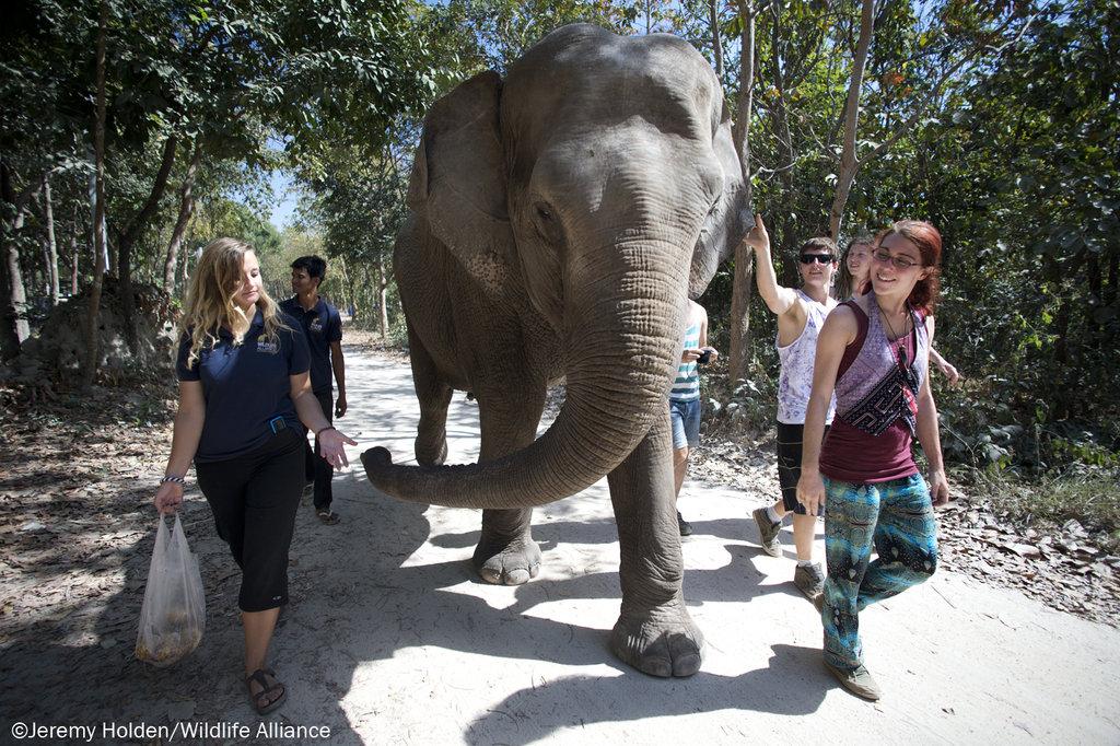 Lucky on her daily walk as Elephant Ambassador