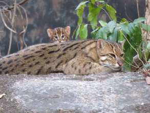 Endangered baby fishing cat born at the Center