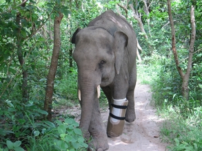 Chhouk now able to walk with his prosthesis