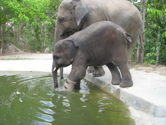 Besties Lucky and Chouk try out the new pool made just for Chouk