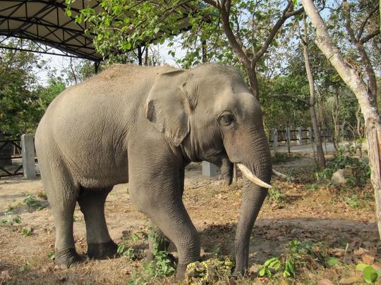 Sakor in his New Enclosure