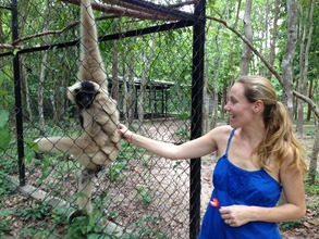 Our Friendly Female Gibbon