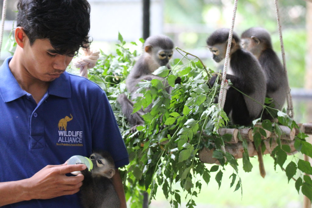 Help Care for Rescued Animals in Cambodia