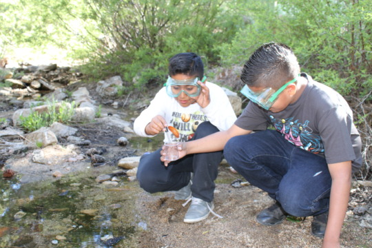 Students conduct water quality experiments