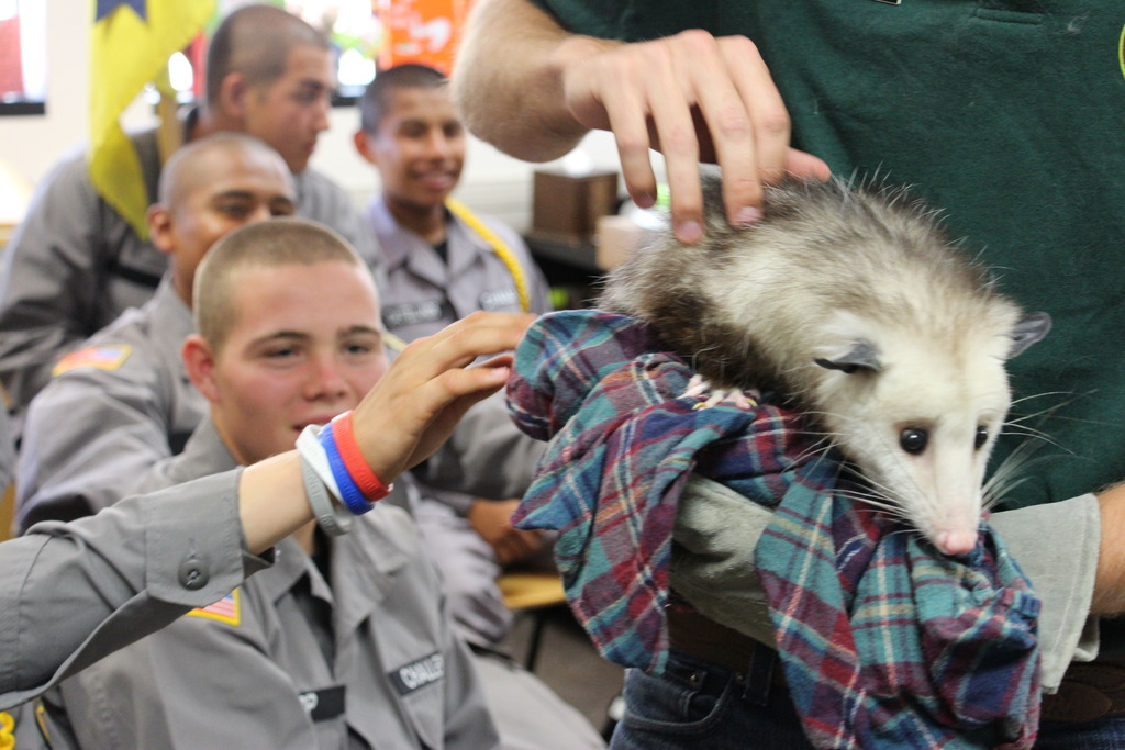 Learning about native wildlife - Acorn the Opossum