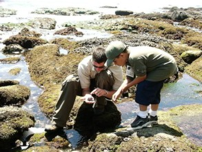 Discovering adaptations of tidepool organisms