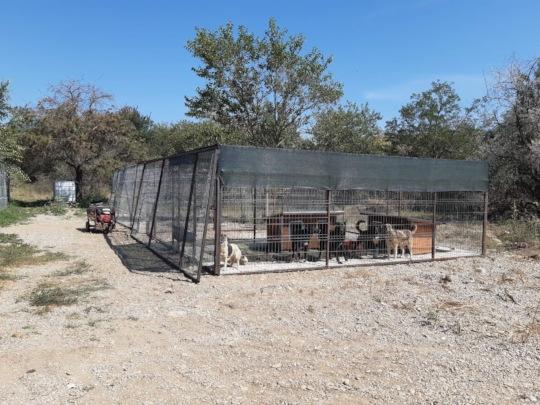 new kennels in Bucov