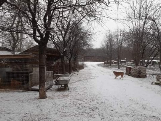 Winter is back in Bucov