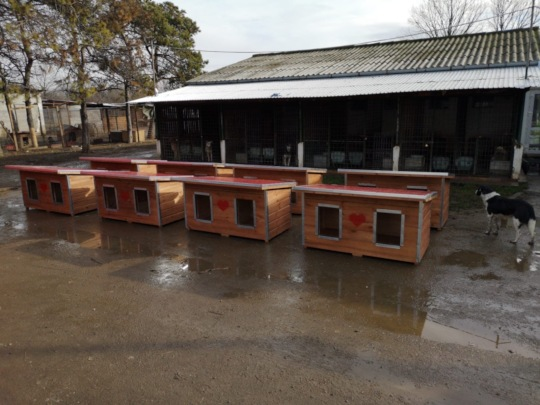 new doghouses brought in wintertime