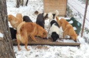 Facing the winter in (all) our shelters