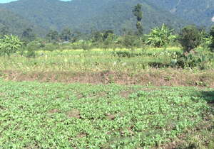 Devdaha--Durga's Organic Crops Microgrant Project