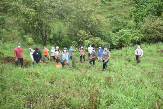 Volunteers in a reforestation in La Miel