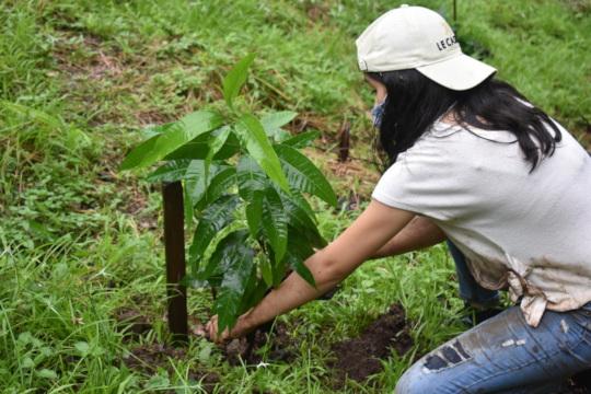Volunteer reforesting