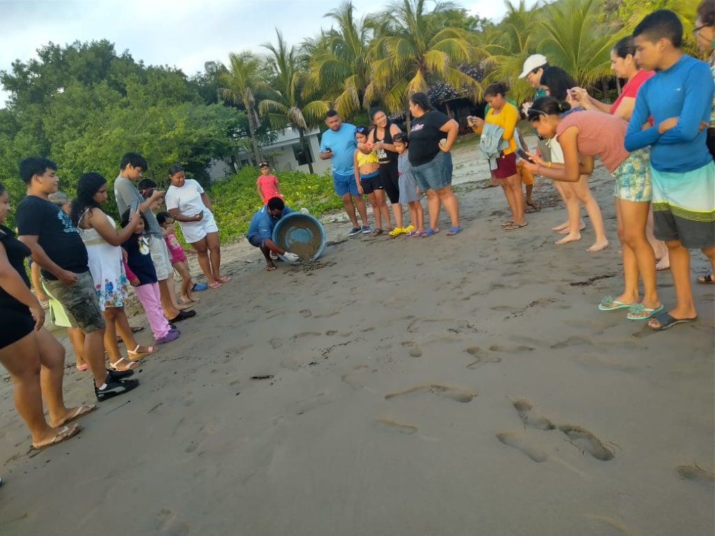 Local tourists attend turtle hatchling release