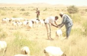 Protect and rehabilitate livelihoods of Vulnerable