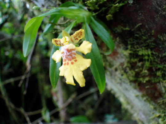 Newly seen miniature orchid