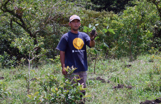 Jose planting