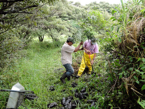 Miguel and Omar, placing the seedling in the hole
