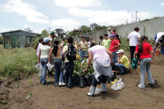 Planting the collected seedlings in new nursery