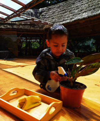Learning the importance of plant care