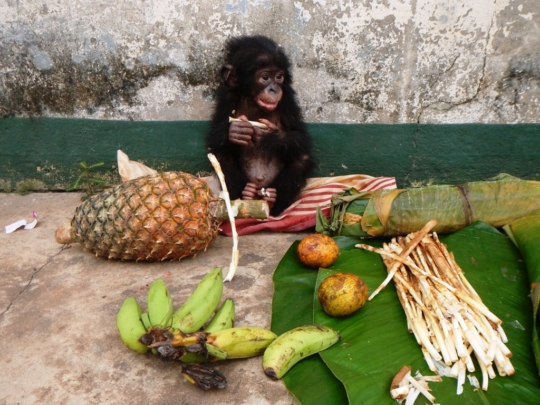Bikoro and some much-needed nourishment
