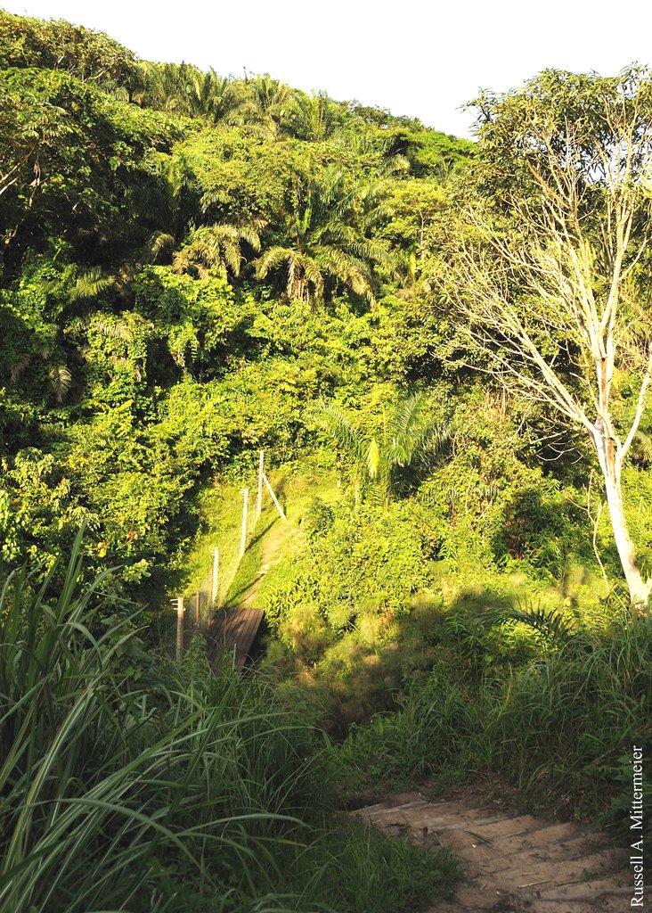 The beautiful forests of Mbandaka