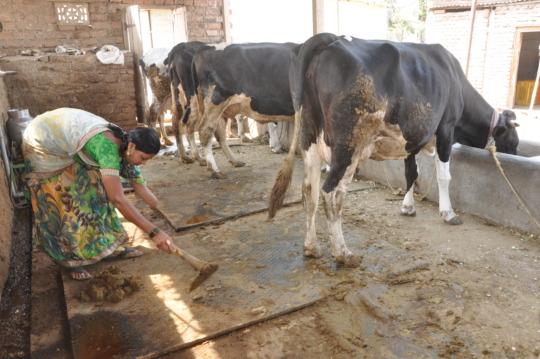 Dhanashree at her farm