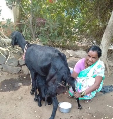 Sangeeta with her goat