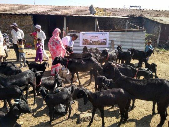 Goat Vaccination program of Mann Deshi 1