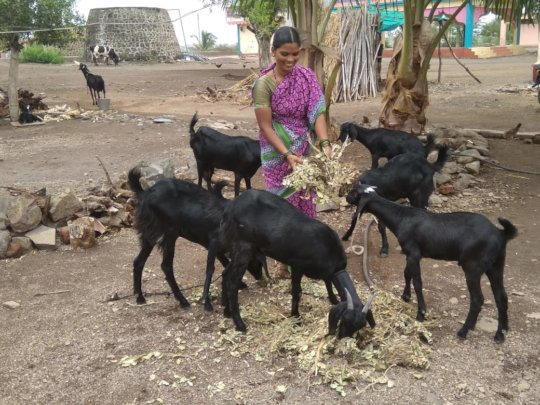 Balutai with her goats
