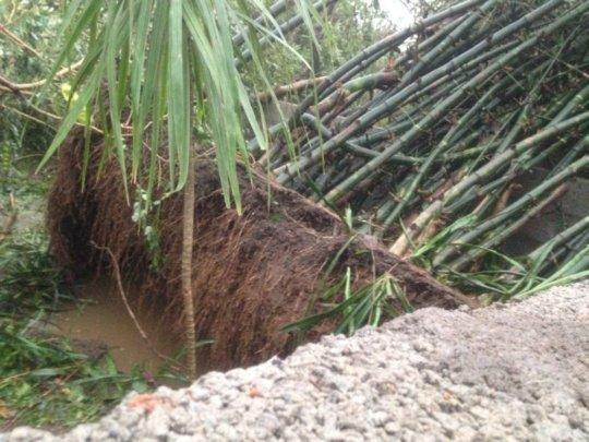 varrtha cyclone damage7