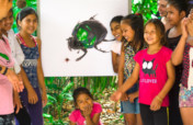 The Amazon Burning - Kids and Bugs to the Rescue!