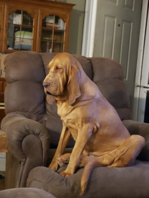 Sophie claiming the recliner