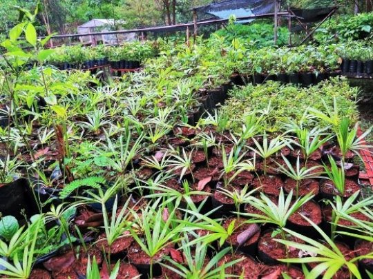 Healthy seedlings - future forest