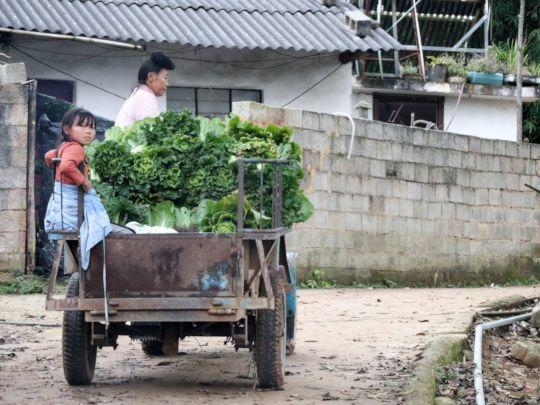 Bringing in a harvest of veggies