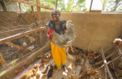 Sustainable livelihoods for 220 farmers in Kenya